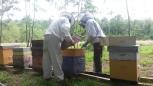 Les apiculteurs aux travail