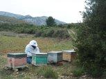 Les ruches dans les Corbières