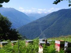 Les ruches avec vue sur les Pyrénées